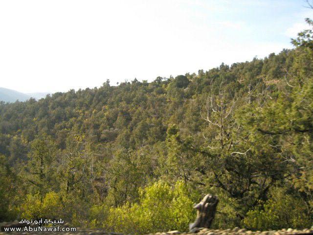 صور خلفيات مناظر طبيعية جميلة جدا من ابها و الباحة و الطائف 2aed4e91b2.jpg
