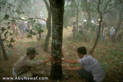 عالم الأشجار وملحق عن شجرة العود