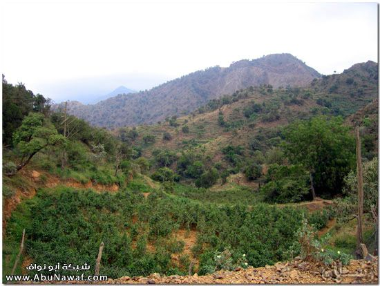 صور طبيعة جازان وجبالها الساحرة mk10587_img_7305.jpg